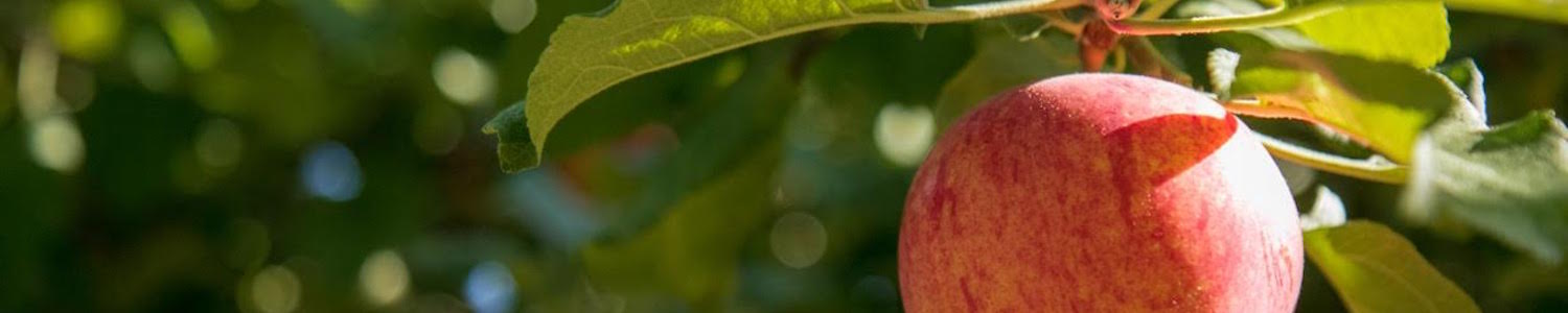 Becky Smith's apple tree header